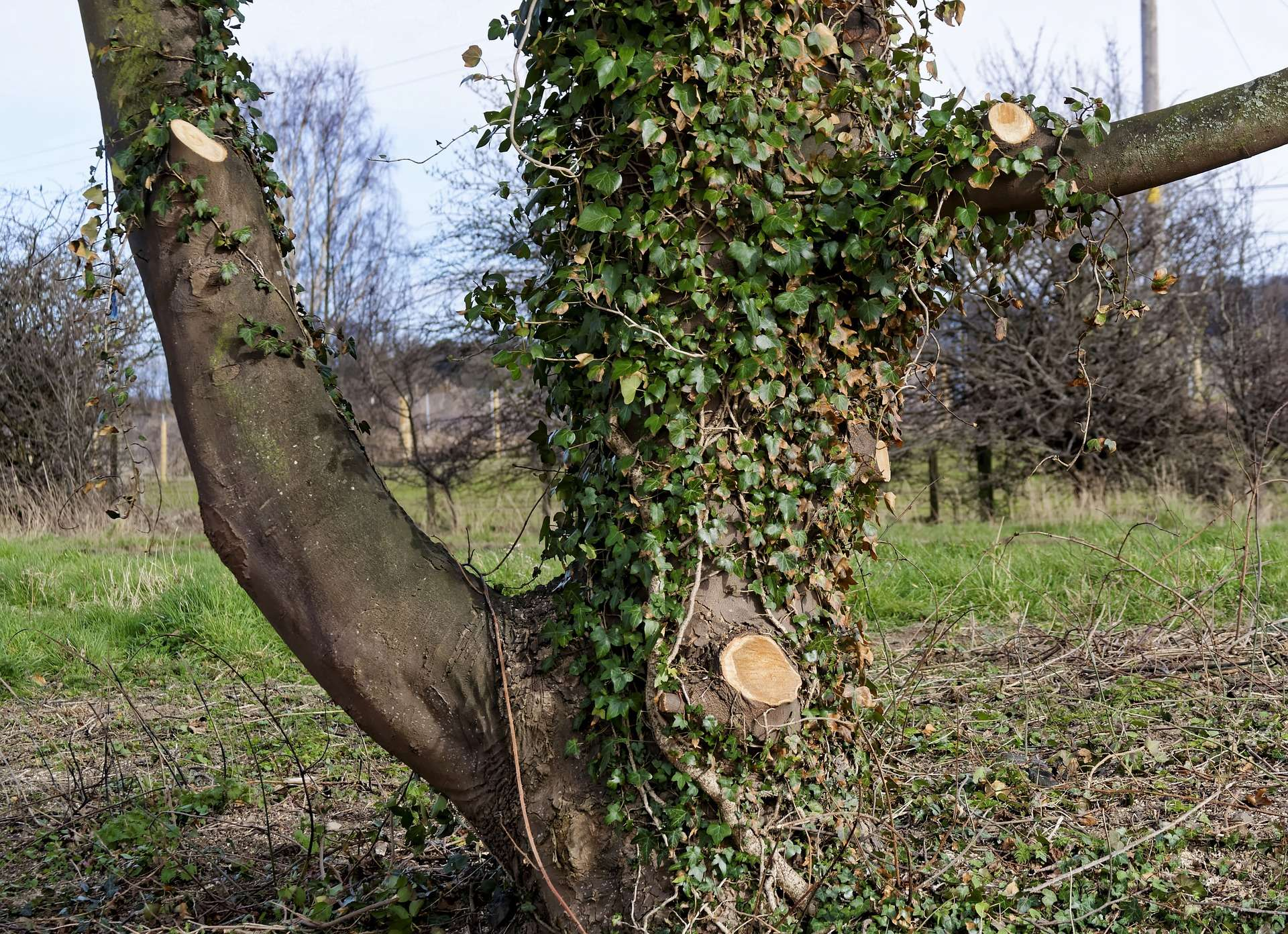 arbor-local-tree-surgeons-image