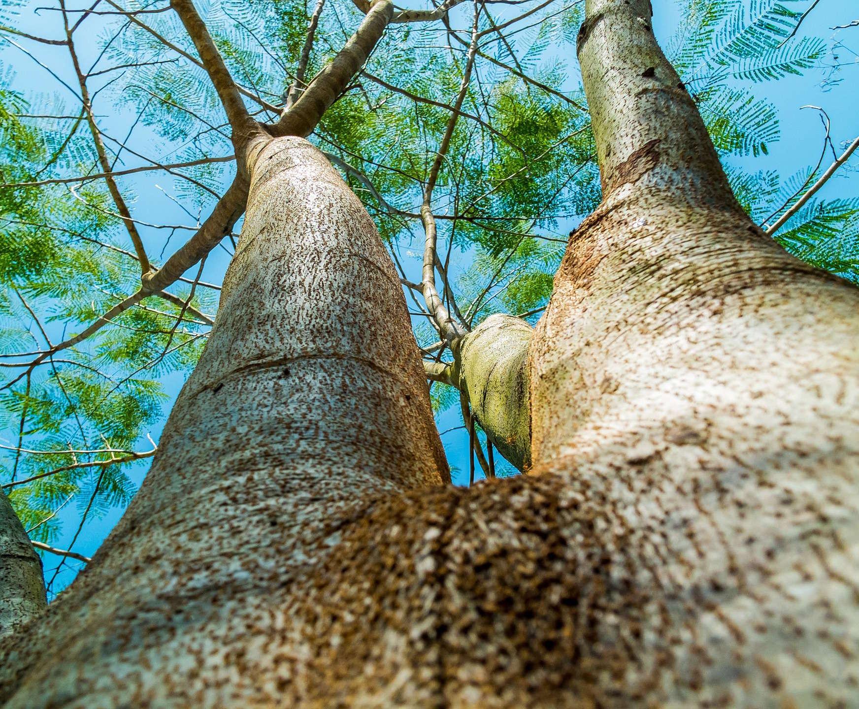 expert-tree-local-tree-arborist