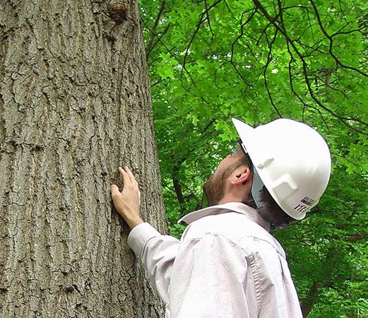 arbor-tree-survey-2