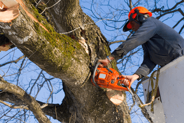 tree-felling-cutting-down-image-1