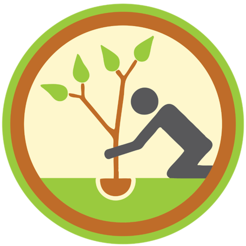 tree-planting-and-installation-icon