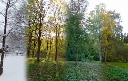 tree-planting-mark-the-seasons